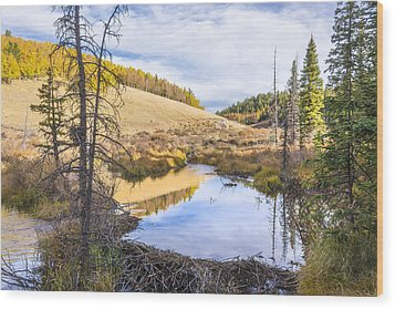 Horsethief Creek Beaver Pond - Cripple Creek Colorado Wood Print by Brian Harig