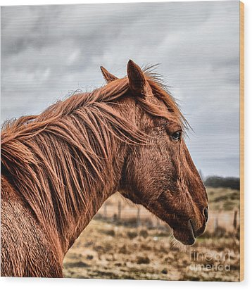 Horsey Horsey Wood Print by John Farnan