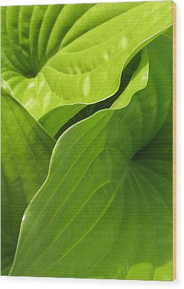 Hosta Leaves Wood Print