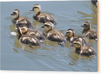 Hot Chicks Out For A Swim Wood Print by Optical Playground By MP Ray