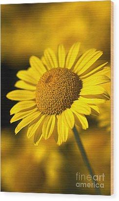 Hot In The Sun Wood Print by Joy Watson