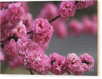 Hot Pink Blossom Wood Print by Joy Watson