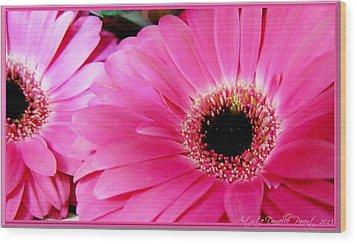 Hot Pink Gerber Daisies Macro Wood Print