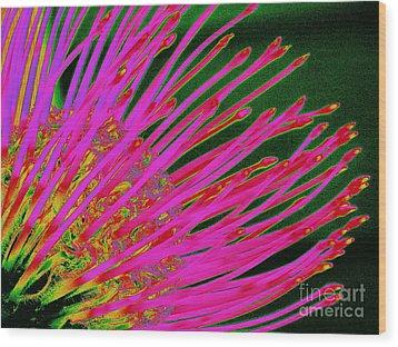 Hot Pink Protea Wood Print by Ranjini Kandasamy
