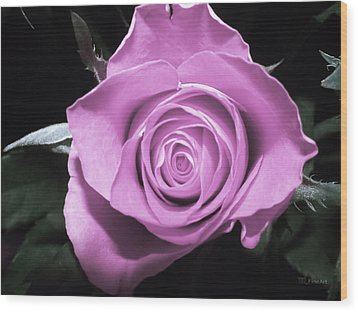 Hot Pink Rose Wood Print by Yvon van der Wijk