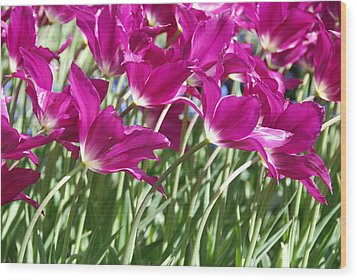 Wood Print featuring the photograph Hot Pink Tulips 2 by Allen Beatty