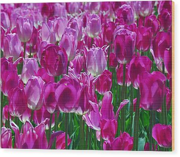 Hot Pink Tulips 3 Wood Print by Allen Beatty