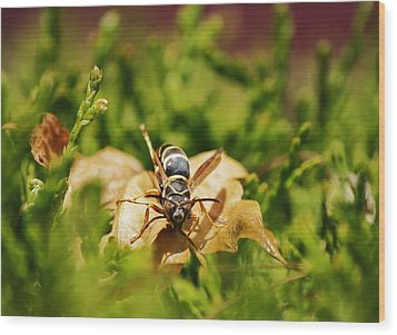 Wood Print featuring the photograph Hot Wasp... by Al Fritz
