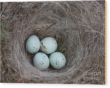 House Finch Nest Wood Print