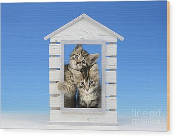House Of Kittens Ck528 Wood Print by Greg Cuddiford