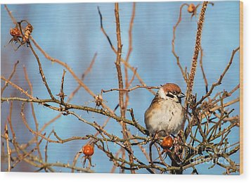 Wood Print featuring the photograph House Sparrow by Rose-Maries Pictures