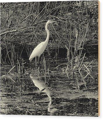 Houston Wildlife Great White Egret Black And White Wood Print by Joshua House