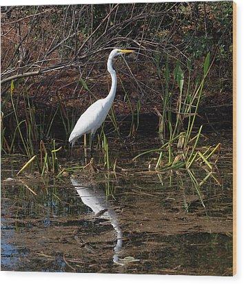 Houston Wildlife Great White Egret Wood Print by Joshua House