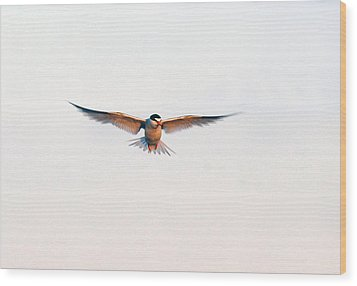 Hover Wood Print by Barry Goble