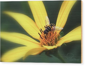 Wood Print featuring the photograph Hover Fly On Flower by Ludwig Keck