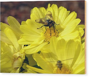 Hoverfly Wood Print by Christina Rollo