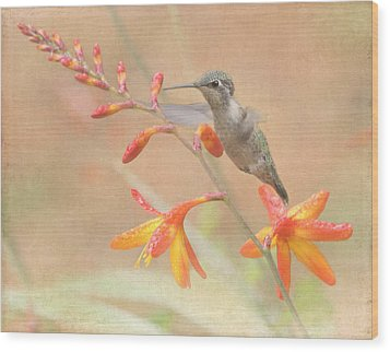 Hovering In The Crocosmia Wood Print by Angie Vogel