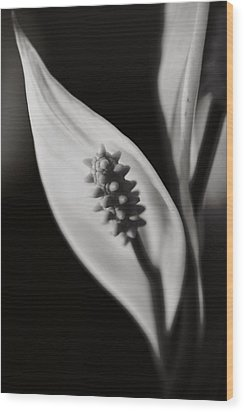How Can We Let It Slip Away? Wood Print by Laurie Search
