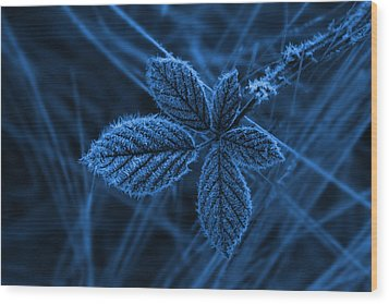 Wood Print featuring the photograph How Cold by Keith Hawley