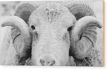 Wood Print featuring the photograph How Ewe Doin by Courtney Webster