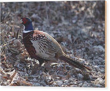 Howard County Pheasant Wood Print