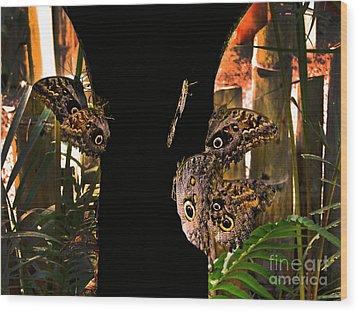 Huge Butterflies In Mindo Wood Print by Al Bourassa
