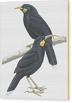 Huia Wood Print by Anonymous