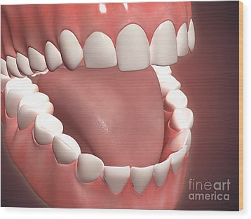 Human Mouth Open, Showing Teeth, Gums Wood Print by Stocktrek Images