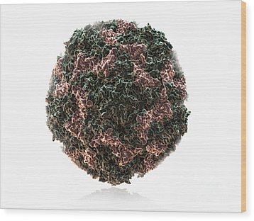 Human Rhinovirus Wood Print by Evan Oto