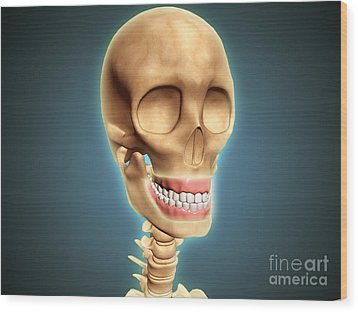 Human Skeleton Showing Teeth And Gums Wood Print by Stocktrek Images