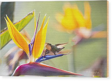 Hummer At Bird Of Paradise Wood Print