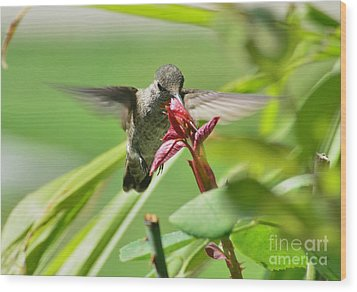 Wood Print featuring the photograph Hummer At The Rose by Debby Pueschel