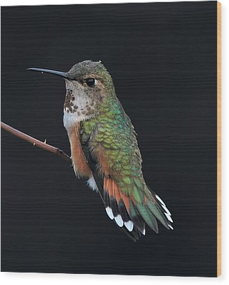 hUMMER Wood Print by Ray Morris
