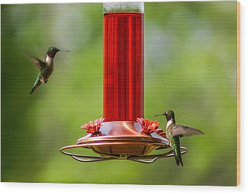 Humming Birds Wood Print