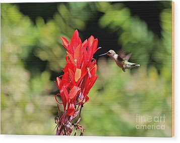 Hummingbird 1 Wood Print