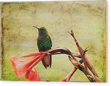 Wood Print featuring the photograph Hummingbird 1 by Teresa Zieba