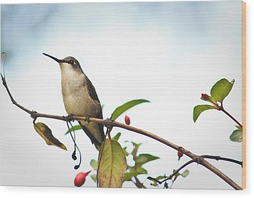 Wood Print featuring the photograph Hummingbird 2 by Tammy Schneider