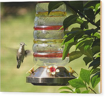 Wood Print featuring the photograph Hummingbird - 2 by Teresa Schomig