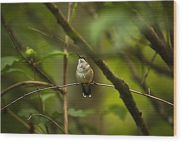 Wood Print featuring the photograph Hummingbird 3 by Tammy Schneider