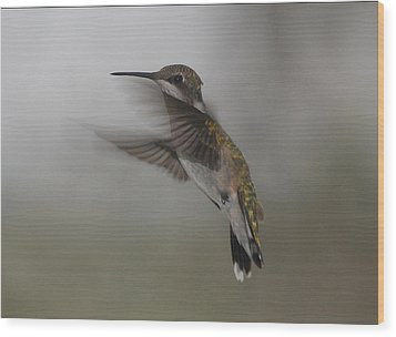 Wood Print featuring the photograph Hummingbird 6 by Leticia Latocki