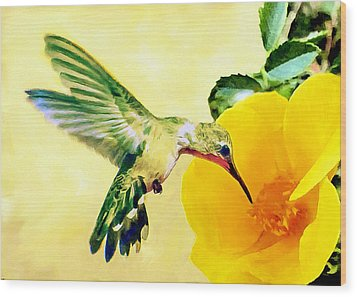 Hummingbird And California Poppy Wood Print by Bob and Nadine Johnston