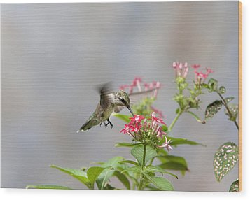 Wood Print featuring the photograph Hummingbird And Penta by Robert Camp