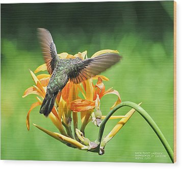 Wood Print featuring the photograph Hummingbird At Lunchtime by David Perry Lawrence