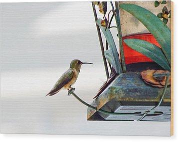 Hummingbird At Rest Wood Print by Adria Trail