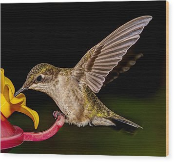 Ruby Throated Hummingbird Wood Print