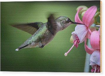 Hummingbird Carbs Wood Print