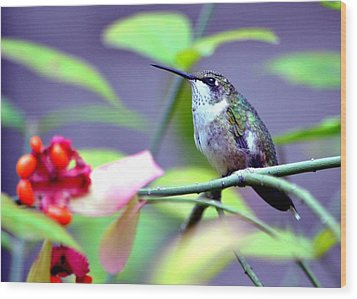 Wood Print featuring the photograph Hummingbird by Deena Stoddard