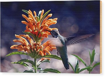 Hummingbird Delight Wood Print by AJ  Schibig