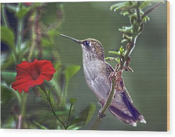 Hummingbird Delight Wood Print by Sandi OReilly