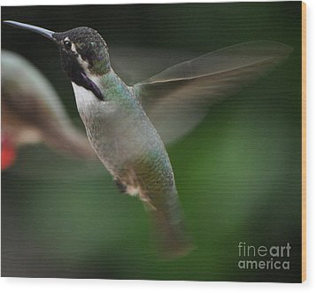 Wood Print featuring the photograph Hummingbird Male Anna In Flight Over Perch by Jay Milo